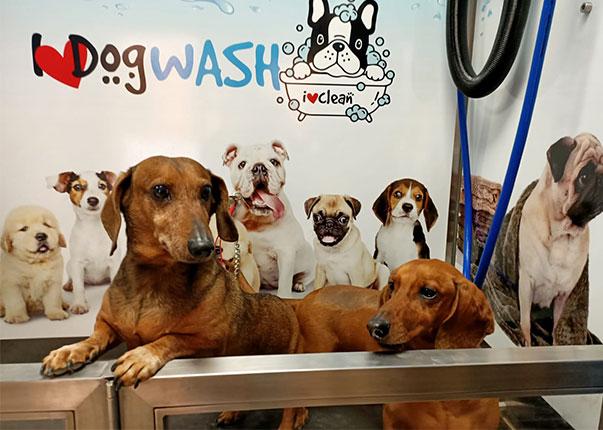 Los salchichitas de 2 en 2 fieles clientes de i love dog wash